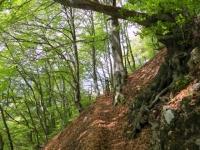 Salita all'Alpe Bolla, sentiero finale