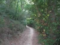 GF longobardi  - passaggio nel bosco