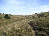Sentiero lungo l'Alta Via dei Monti Liguri, dal Colle Gandolfi al Passo Veleno