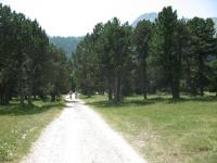 in direzione dell'Alpe Casaccia