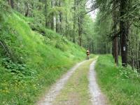 Tratto nel bosco verso l'Alpe Tronchaney