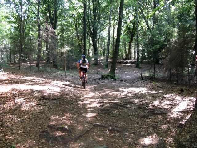 Tratto nel bosco dopo il termine dell\'asfalto