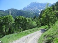 Lungo lo sterrato che da Fenils sale allo Chaberton -  sullo sfondo il monte