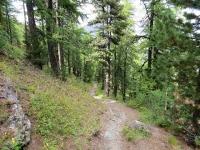 Single-track che scende all'interno della Val Gimont