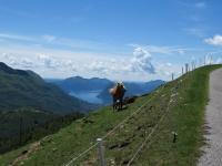 Alpe Rompiago - Particolare