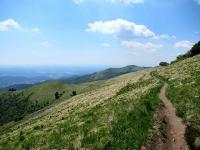 Bel single track che scende dalla cima del Monte Bolettone