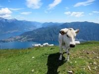 Alpe di Mezzegra