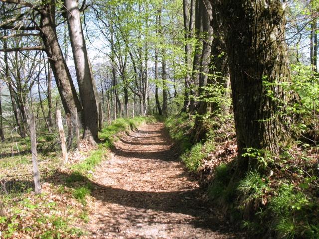 In direzione dell\'Alpe di Colonno