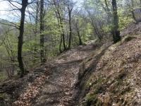 Salita su ripida forestale all'Alpe di Colonno