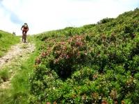Lungo le pendici del Gradiccioli dalla Bassa di Montoia