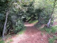 Tratto finale del sentiero che collega La Bassa con l'Alpe di Torricella