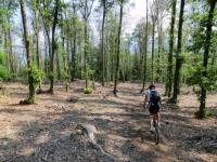Nei boschi tra Roggiano e Brezzo di Bedero
