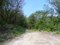 Forestale in direzione di Pralongo