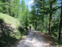 La forestale che dal ponte di Rhuilles sale alla Grange Chabaud