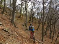 Bel tratto nel bosco in direzione di San Calimero