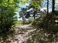 Inizio del single track per il Monte Pracaban