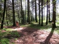 Nei boschi tra Premeno e Pollino