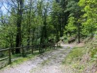Lungo la forestale che parte dal Sacro Monte in direzione di Caronio
