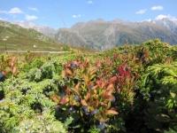 Eccezionali mirtilli trovati scendendo a valle su sentiero