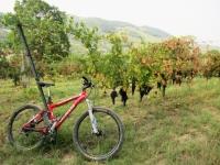 Coltivazioni nei dintorni di Borgo Priolo