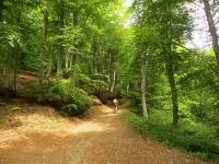 Salita su forestale all'Alpe Camasca