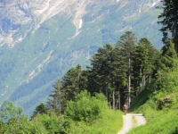 Forestale che sale alla Capanna Gorda - particolare