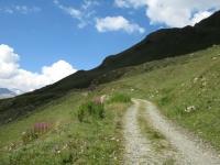 Salendo verso il Passo Invergneux