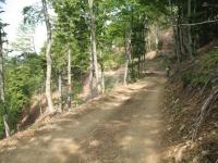 Ritorno su forestale verso Il Colle