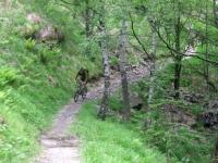 Single-track in direzione dell'Alpe Murecc -passaggio nel bosco