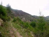 Single-track che aggira la cima del Monte Moncucco  -bocchetta su Piandanazzo