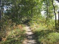 Single track nella Serra