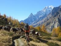 Trail d'alta quota in direzione del Rifugio Bonatti - animali al pascolo prima dell'arrivo dell'inverno