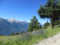 Panorama percorrendo lo sterrato che attraversa il bosco di Cheney dopo Nissod