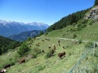 Salita al Col di Portola, panorama