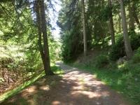 Lungo la forestale che conduce al Colle di Joux