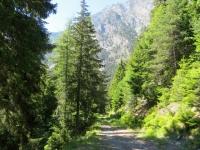 La traccia di forestale che taglia i versanti occidentali del Monte di Fromy e della Cima Botta