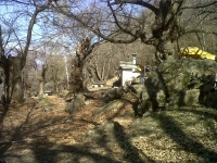Tratto nel bosco a spinta - radura