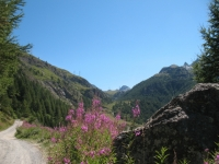 Salita al rifugio Sogno presso l'Alpe Peradzà lungo il vallone dell'Urtier