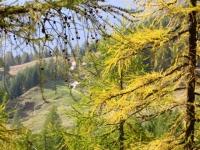 Alpe Dorcia intravista tra i colori dell'autunno