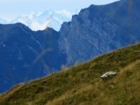 Scorcio su Monte Rosa dal sentiero per Casera Aralalta