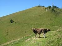 Nei pressi della Bocchetta di Terrabiotta, una mucca a 2 teste ???!!