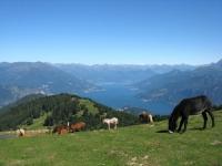 Magnifico panorama dell'Alto Lago dalla Bocchetta di Terrabiotta