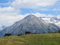 Alpeggio di Tschorr - bel panorama sul Wilerhorn (3.307) e sul Joligletscher