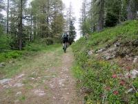 La forestale che collega Unners Sänntum con Gibidum