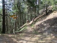 Il bellissimo sentiero nel bosco che si percorre scendendo ad Unterbäch
