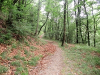 Sentiero per Musignano
