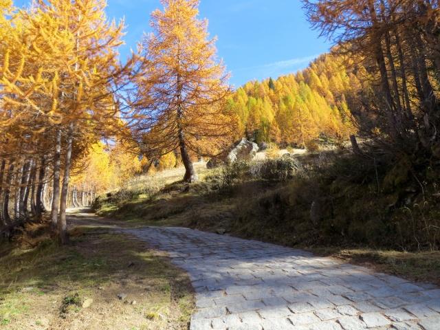 Strada degli Alpi - salita alla Alpe di Valleggia
