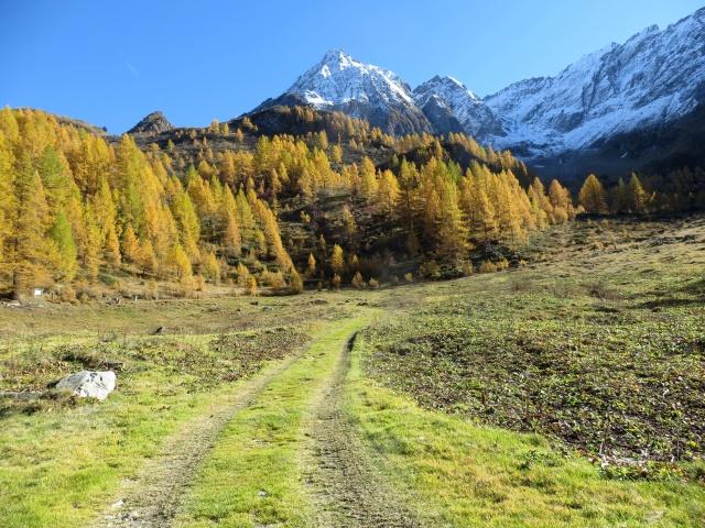 In direzione della Alpe Cassina Nuova