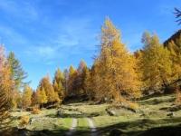 Strada degli Alpi - salita all'Alpe di Folcra