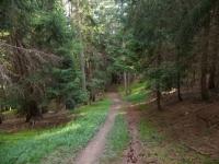 Il bel sentiero che scende a Varen dalla Varneralp - passaggio nei boschi